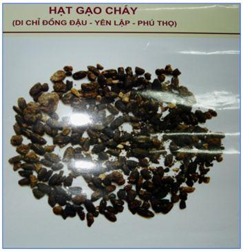 Bài 13. Việt Nam thời nguyên thủy