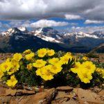 """""""Giữa một vùng đất khô cằn sỏi đá, cây hoa dại vẫn mọc lên và nở ra những chùm hoa thật rực rỡ."""""""